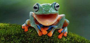 """Produttività, come aumentarla? Il metodo """"Eat that frog!"""""""